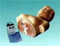 心肺復蘇|心肺復蘇訓練模型|新型人體半身心肺復蘇模型 FSR-II/NT-1