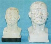 人體頭部針灸穴位模型(頭部四功能針灸腧穴模型22CM)|上海红杏视频在线播放网址科教設備有限公司  H022-1