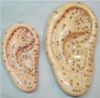 人體針灸模型(耳針穴模型.耳針穴位模型13CM)|上海私人红杏影院hxsptv在线观看科教設備有限公司  H025