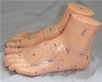 足部保健反射區模型 按摩足模型20CM H030-1