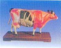 動物針灸模型(牛體針灸教學模型)|上海私人红杏影院hxsptv在线观看科教設備有限公司  GD/C10021-2