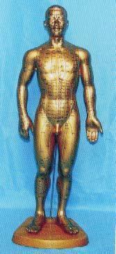 人體針灸模型(銅人針灸穴位模型 50CM)|上海红杏视频下载安装黄科教設備有限公司  H017-2