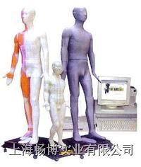 中医针灸模型 光电感应多媒体人体针灸穴位发光模型 MAW-170E