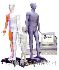 针灸模型 光电感应人体针灸穴位发光模型 JAW-170E