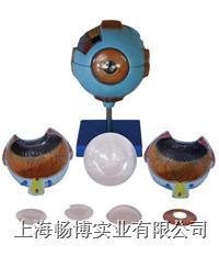眼球放大模型  XC-316