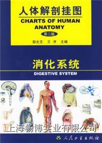 医学挂图|《人体解剖挂图》-消化系统挂图 CBB-GT-2(25张)