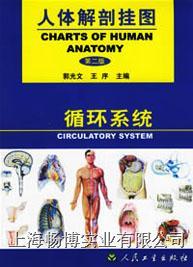 人体解剖挂图|《人体解剖挂图》-循环系统挂图 CBB-GT-5(26张)