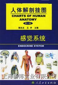 医学挂图|《人体解剖挂图》-感觉系统挂图 CBB-GT-7(12张)