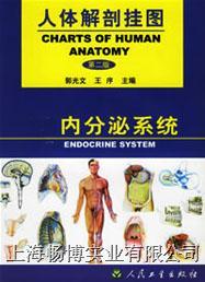 医学解剖挂图|《人体解剖挂图》-***系统挂图 CBB-GT-8(4张)