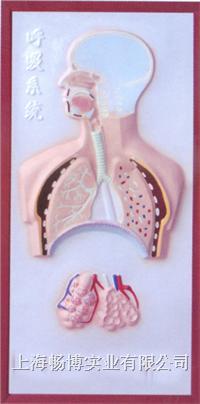 医学科普用品|科教用品|教育装备|医学模型之呼吸系统浮雕模型 CLM-2079-3