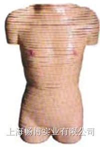 医学影像诊断模型|女性躯干横断断层解剖模型 SMR03