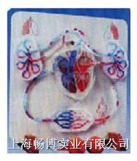 电动模型|手动液压式血液循环模拟仪 SME101