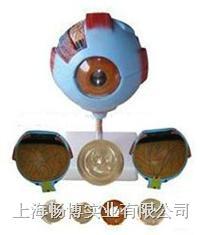 医学模型|眼睛模型|眼球模型 CBB/316