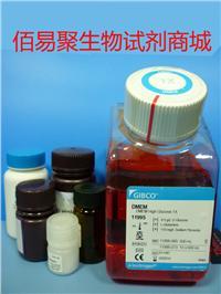 DMEM高糖 11995065