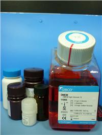 Collagenase膠原酶II(原裝) orj-1021