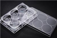 6孔細胞培養板 30006