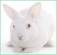 兔多克隆抗體定制服務