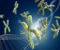 基因組整體甲基化水平檢測