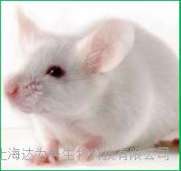 小鼠單克隆抗體制備