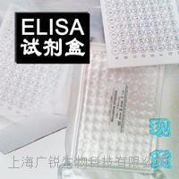 大鼠Col ⅢELISA代測免費