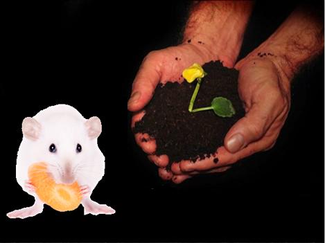 動/植物培養及醫療