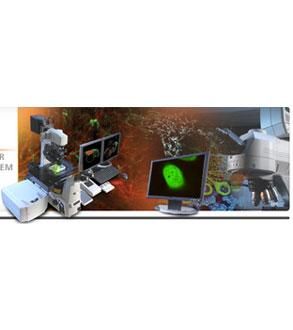 尼康金莎代理 NIKON 激光扫描共聚焦显微镜A1 NIKON A1